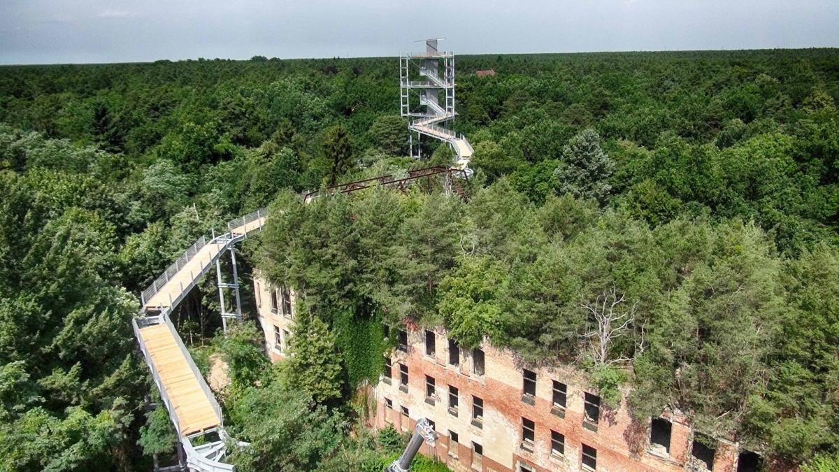 Beelitz-Heilstätten ścieżka w koronie drzew