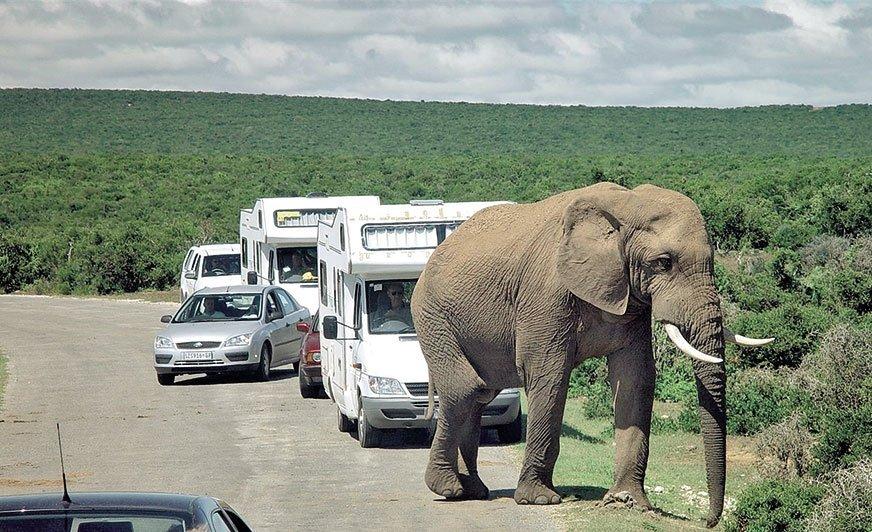 Aby bez przeszkód podróżować kamperem po kontynencie afrykańskim, trzeba legitymować się międzynarodowym prawem jazdy