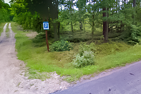 Miejscówka 216 - Sztumskie Pole - las