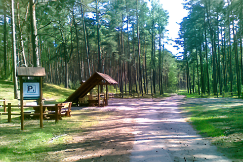 Miejscówka 269 - jezioro Czyste - las