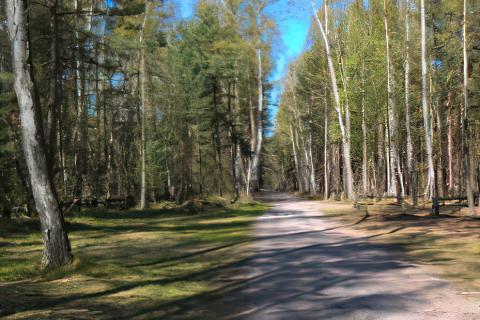 Miejscówka 458 - Mikoszewo parking leśny