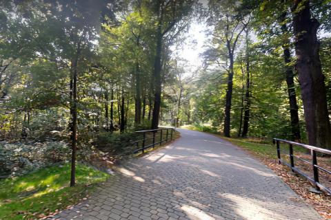 Miejscówka 486 -Pszczyna Park Pałacowy